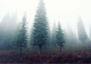flowz.co.uk forest